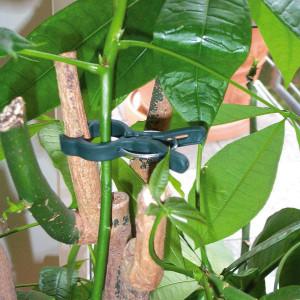 Pflanzenclips Vorteilspackung 12 Stück