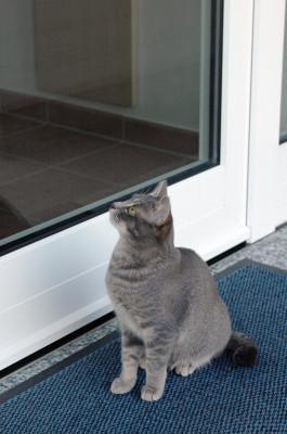 Akustische Trittmatte - Katzenklingel